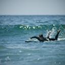 Weird Stranger Spotted Surfing Tourmo